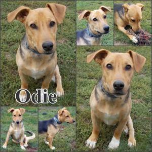 Örökbefogadható kutya: Odie, Hajdúszoboszló