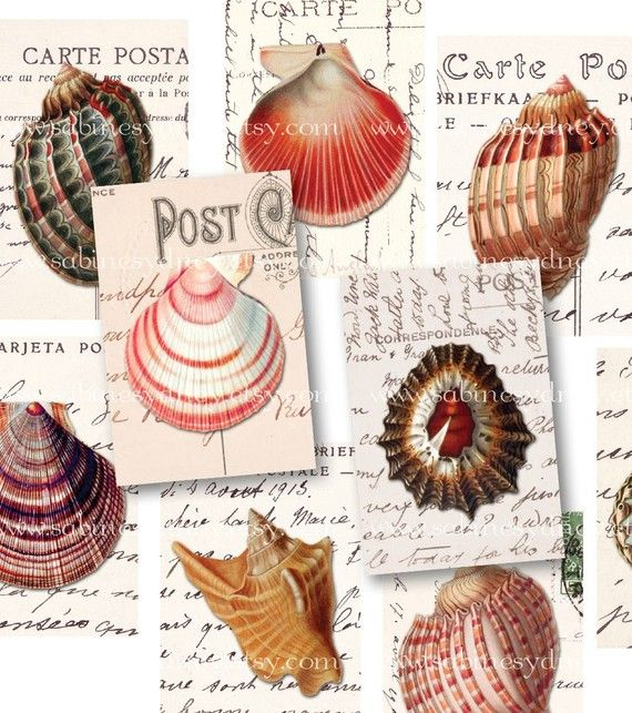 i like the concept of using my watercolor shells cut out and mounted on bookpages or old post cards.
