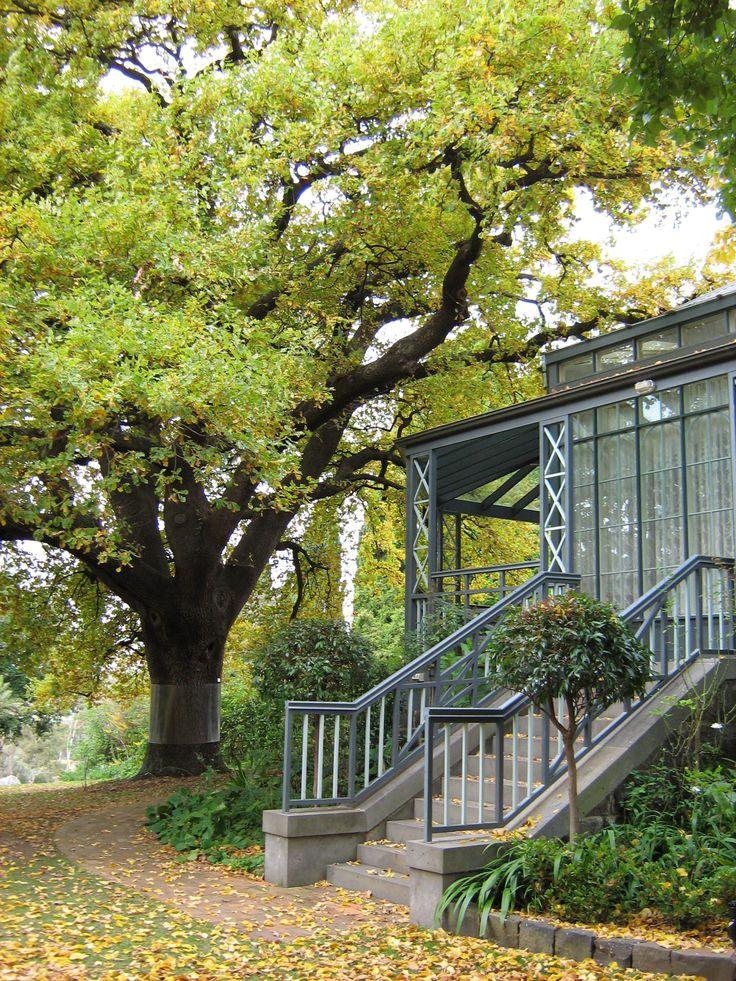 Oak Tree with Autum leaves