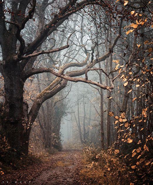 Fotografia da natureza por Oer-Wout