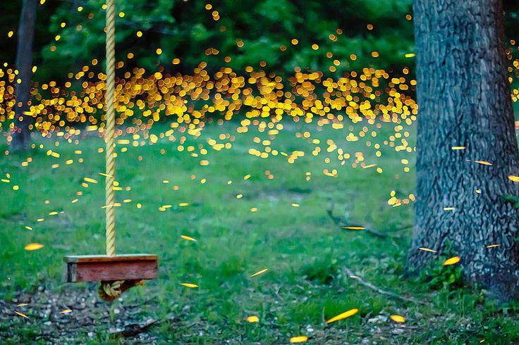 fireflies, Vincent Brady