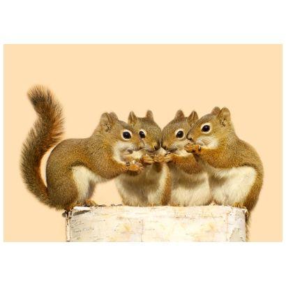 Baby squirrels #postcards