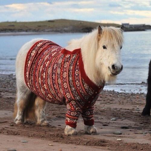 517 best вязание images on Pinterest | Autumn, Crochet pattern and ...