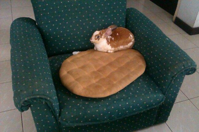 im a chicken bunny