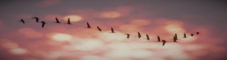"500px / Photo ""Grullas"" by Alfonso Gajardo"