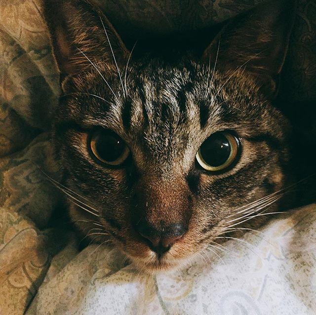 * ▽ ▽ 新年明けましておめでとうございます🌅🌅🌅 タケシ初めての投稿! ▽ 愛猫の雷様 オス 1歳半 雑種 ひざでもおしりの上でものってくる 耳かきのふわふわがだいすきなかわいいやつ。 今年もよろしくお願いします。 ▽ ▽ ▽ #猫#愛猫#雷様#ねこ#ねこ部#ふわもこ部#にゃんこ#にゃんすたぐらむ#ねこすたぐらむ#猫好きさんと繋がりたい#にゃんだふるらいふ#カミナリ#愛猫のかみなり#萌#2018#謹賀新年#爆裂日記#爆裂タケシ#ブログ#fc2#nekostagram #cats #catstagram