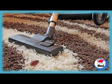 Remedios caseros para eliminar las pulgas de la casa youtube gatos pinterest la pulga - Matar pulgas en casa ...