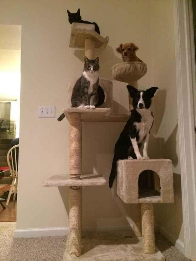 Cette sortie escalade entre amis. | 21 moments de complicité entre chiens et chats