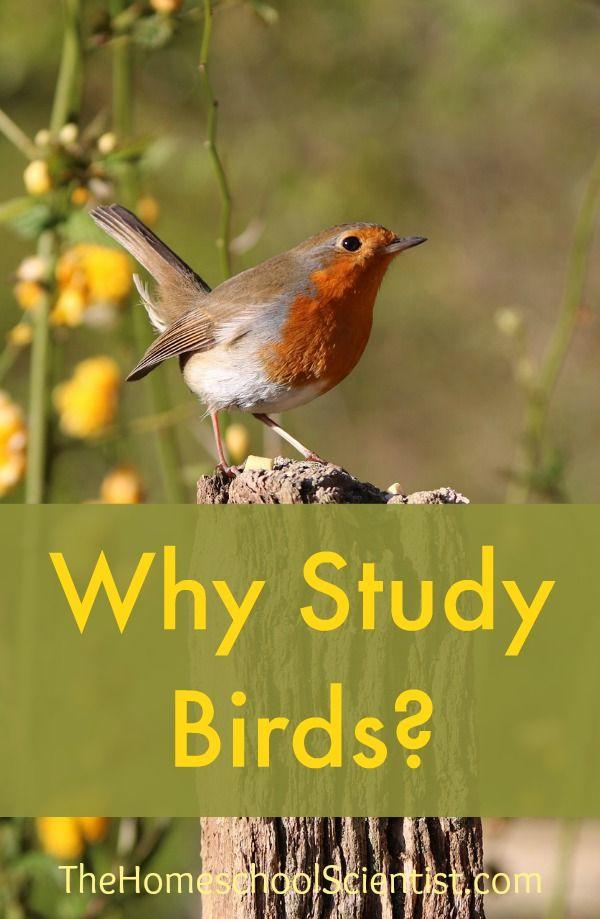 Why study birds? - The Homeschool Scientist