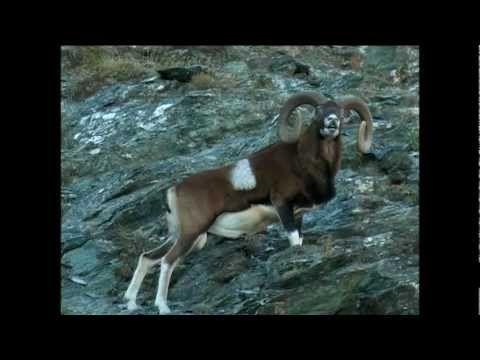 Meet the Animals of Forest, Wood and Mountain - Gli animali del bosco e ...