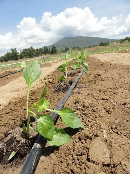 τα φυτά μας μεγαλώνουν!