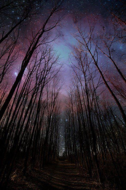 Creepy woods: Forests, Starry Sky, Paths, Night Photography, Night Skiing, Starry Night, Stars, Trees, Night Sky