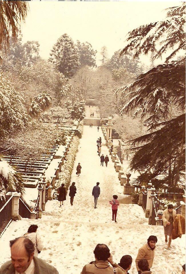 Neve em Coimbra a sério...Segundo informação aqui colocada foi em 11 de Fevereiro de 1983. Aqui trata-se do Jardim botânico