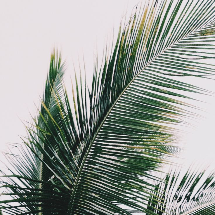 Palm Tree Iphone Wallpaper: Pin By Brad Jensen On 'REZ's EDGE' & 'ANCESTRAL' : Novels