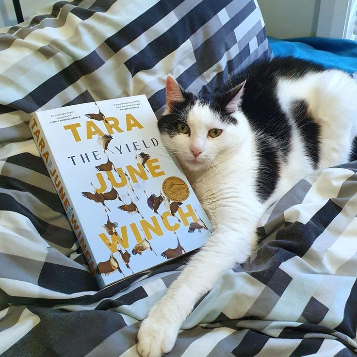 The Yield by Tara June Winch is a story about the Wiradjuri peoples culture language family and the intergenerational trauma of colonisation in Australia. Follow the link in my bio to read my #BookReview #amreading #AusBookBlogger #bookishcommunity #bookish #bibliophile #TheYield #TaraJuneWinch #HistoricalFiction #AustralianFiction #AustralianAuthor #igreads #ReadersOfInstagram #Goodreads