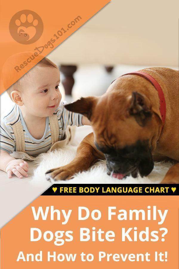 Family Dogs That Bite Kids Dogs Kids Family Dogs Dog Behavior