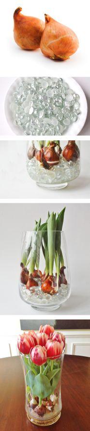 Cómo hacer crecer Tulipanes desde tu Hogar ~ Enviaflores.com Blog