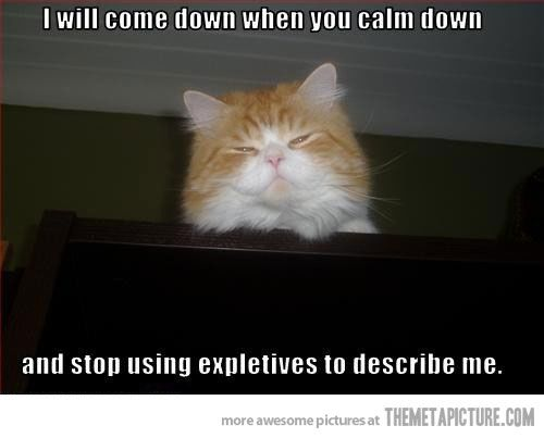Calm down human…: Kitty Cat, Calm Down, Funny Cat, Classic Lolcat, Funny Pictures, Authorit Cat, Funny Stuff, Keep Calm, Funny Animal