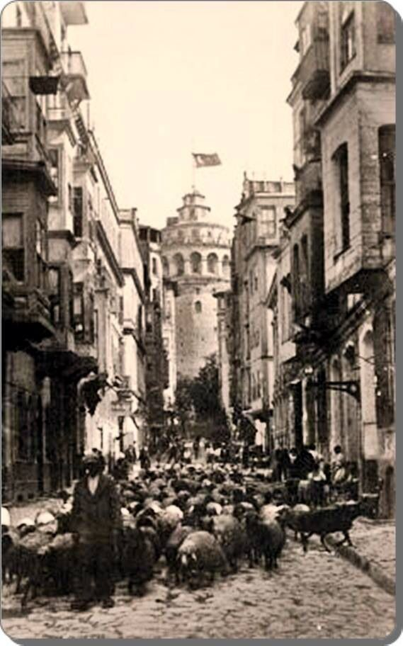 Galata kulsi 1930'lar: a flock of sheep by the Galata Tower in the 1930s