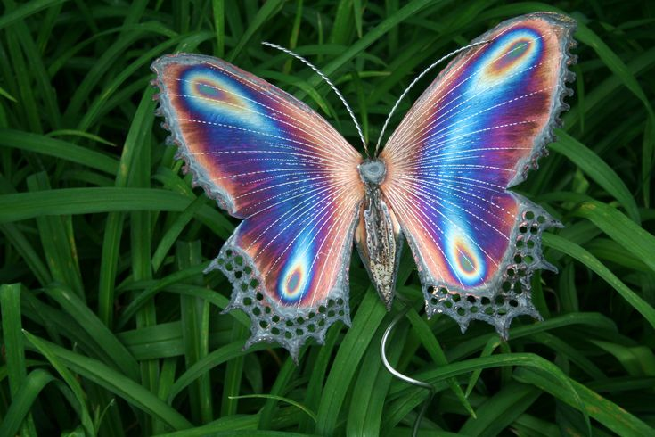 butterflies | The color PURPLE — butterflies | Gardening With Confidence with ...
