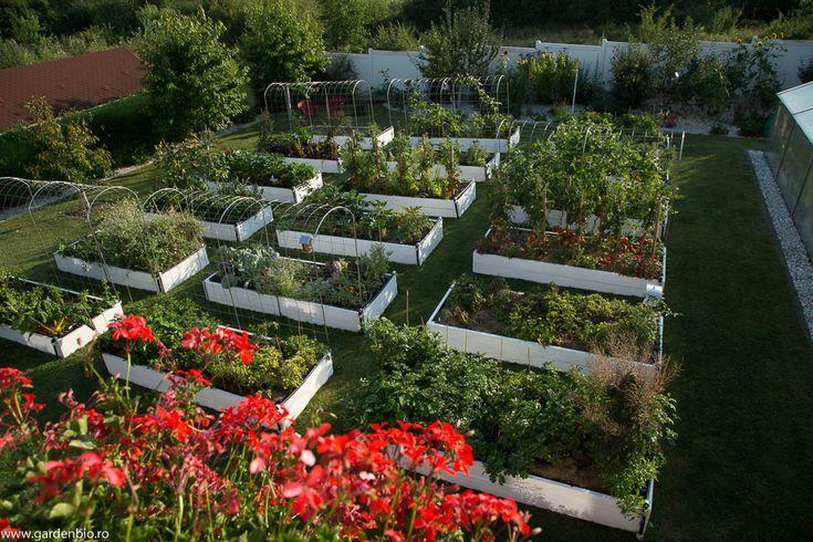 Din păcate, pot spune cu certitudine că hrana consumată din hipermarketuri nu mai este medicamentul nostru, așa cum spunea părintele medicinei, Hipocrate, în urmă cu 2500 de ani. Pe lângă faptul că alimentele și-au pierdut gustul de altă dată, conțin tot mai puțini nutrienți și tot mai multe reziduuri de pesticide. Cultivarea legumelor ecologice în grădina proprie, aduce o serie de avantaje. Vă veți bucura de legume gustoase, sănătoase și proaspete, grădinăritul vă deconectează de la…