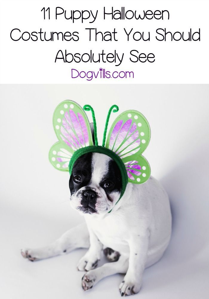 11 Puppy Halloween Costumes That You Should Absolutely See Pet