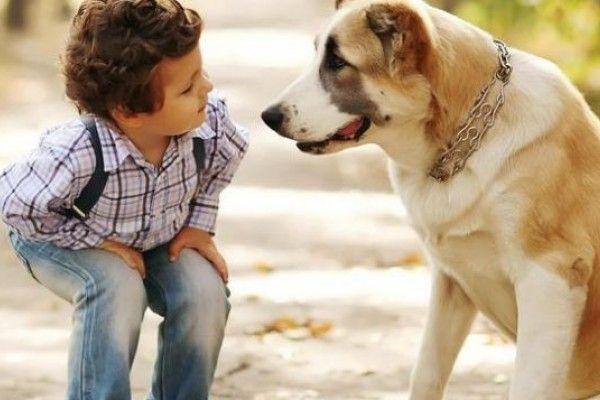 ¿Los perros realmente escuchan a sus dueños? | Informe21.com