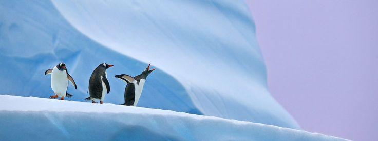 Antartica photographic safari