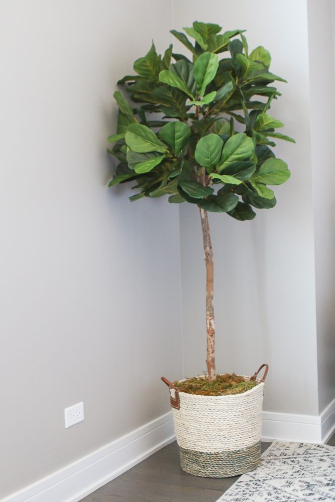 Best 25 Fiddle Leaf Tree Ideas On Pinterest Fiddle Fig