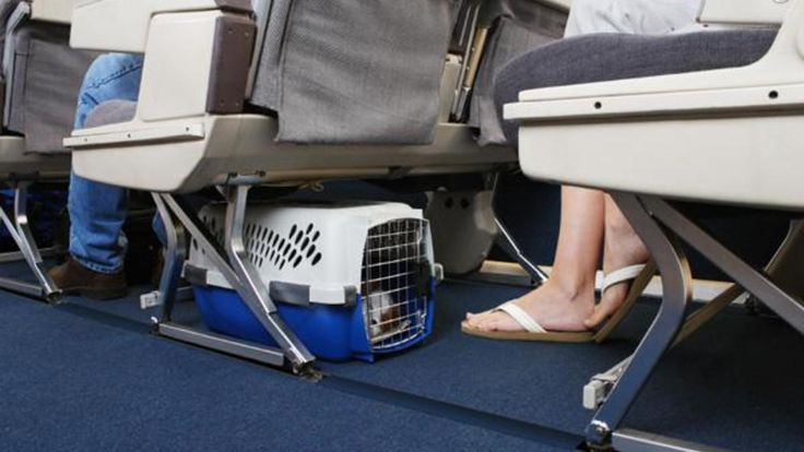 Top 5 Pet-friendly airlines