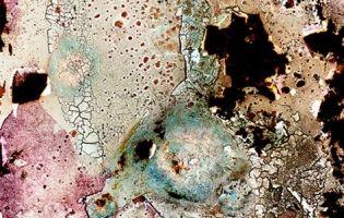 """""""Bacteriograms"""" by Erno-Erik Raitanen"""