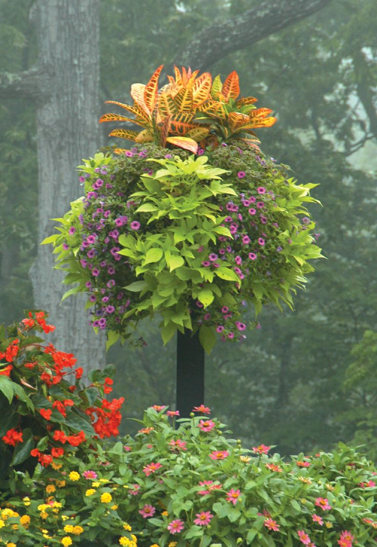 This Basket (planted With Petunias, Sweet Potato Vine, And Crotons) Looks  Like