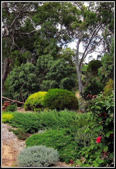 native Australian bush garden..by heatherlss