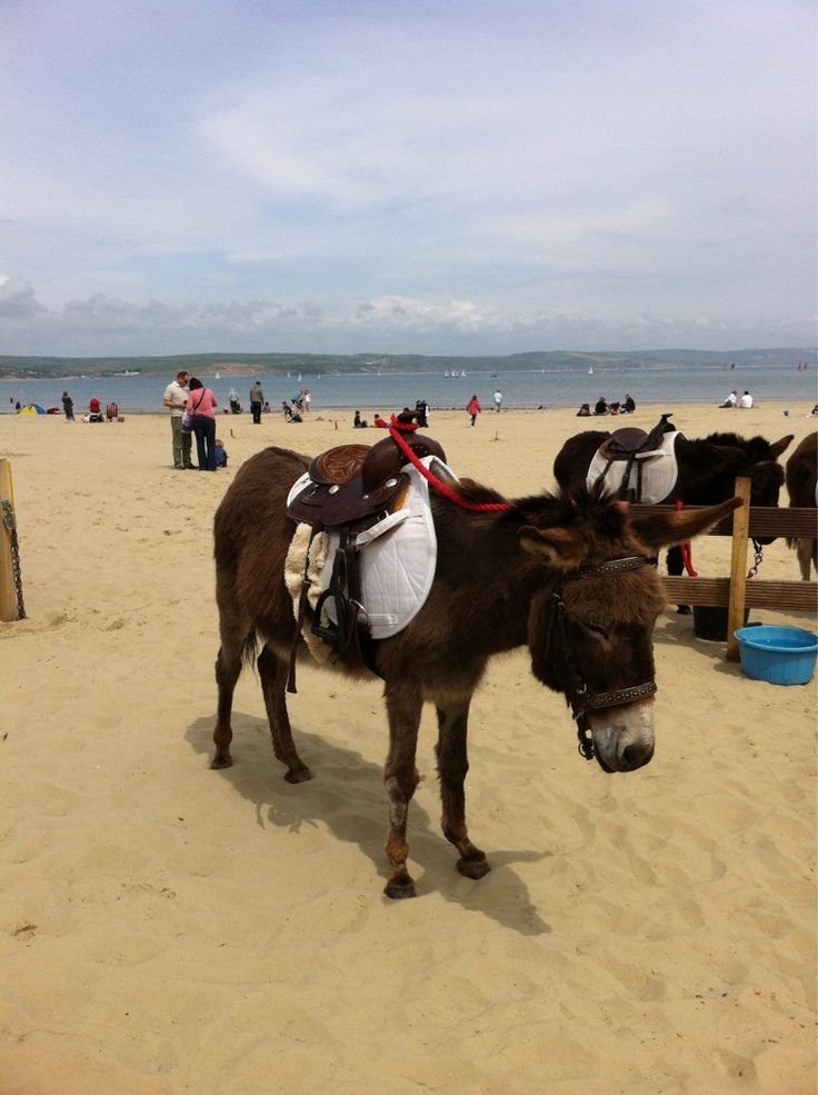 Donkeys on Weymouth beach!   My word does this still happen loved it on my beach in the dim dark past!