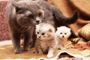 Этапы беременности и особенности ухода за животным - http://vipmodnica.ru/etapy-beremennosti-i-osobennosti-uhoda-za-zhivotnym/