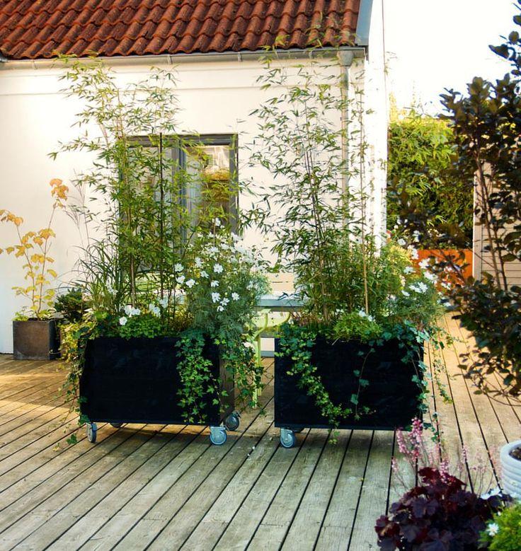 Är fortfarande superglad för mina rullande planteringslådor som vi byggde i början av sommaren De gör verkligen vårt trädäck så mycket…