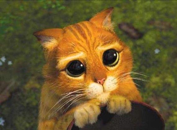 El gato con botas - http://www.notigatos.es/el-gato-con-botas/