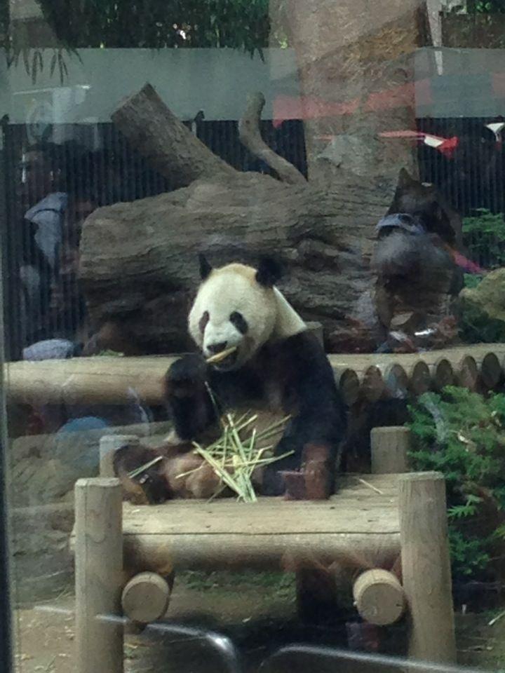 上野動物園 パンダ舎 (Giant Pandas Cage - Ueno Zoo) in 台東区, 東京都