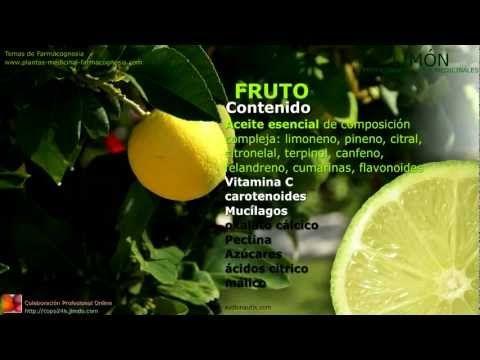 Propiedades del limón. Características y usos medicinales de la planta de limón