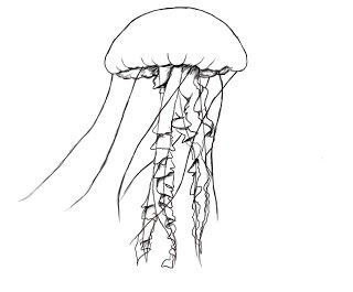 How To Draw A Jelly Fish ~ Draw Central