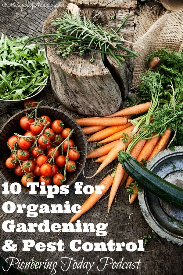 10 Tips for Organic Gardening and Pest Control. Love these tips to naturally keep your garden healthy and ways to get rid of pests without harmful chemicals and pesticides! #gardening