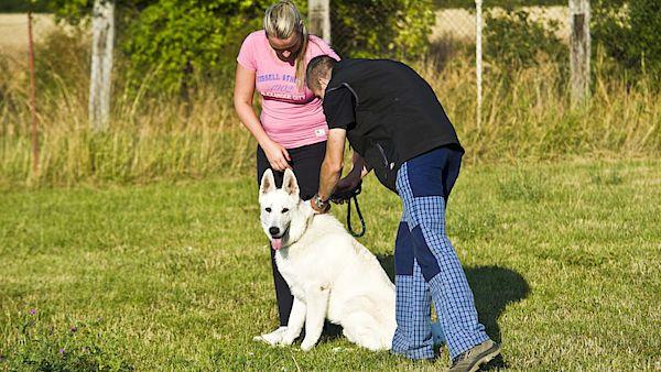 Každý pes musí ovládat alespoň základní pokyny. Pokud není chovatel zkušeným kynologem, nejsnáze se jim naučí spolu se svým psem na cvičáku.