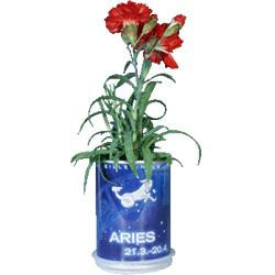 E de cada lata surgirá uma planta!  Flores dos Signos Zodíaco em Lata  As constelações do Zodíaco expressas em belas flores, radiantes de vida.   O primeiro sistema de coordenadas celestial, que simboliza o destino e o carácter de cada pessoa através de 12 signos, conforme a data de nascimento.  Promoção! Preço Para Si: 8,70 €