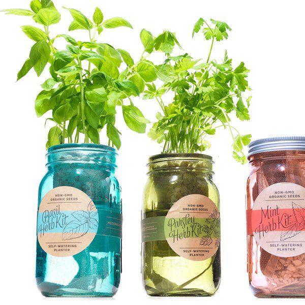 Kitchen Herb Kit