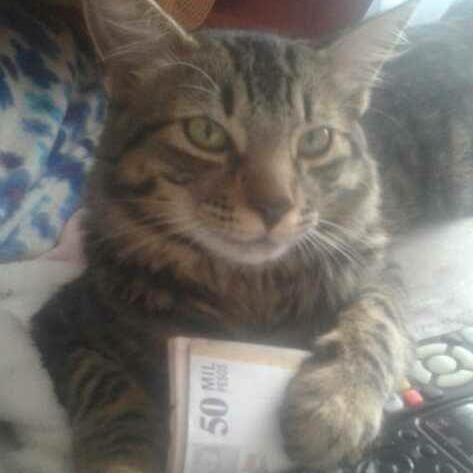 Un gato ostentoso.