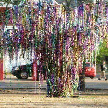 This tree grows only in New Orleans! ! It's that time of year again. Happy Carnival season!