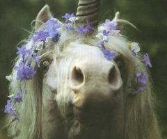Unicorns of the Field - Robert Vavra
