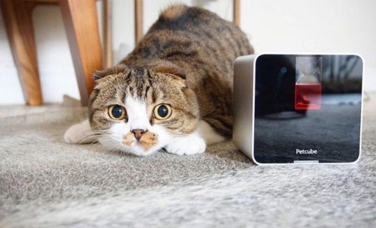 В России появится камера для домашних питомцев Petcube