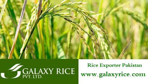 Rice Exporter Pakistan http://www.galaxyrice.com/Rice-Exporter.html