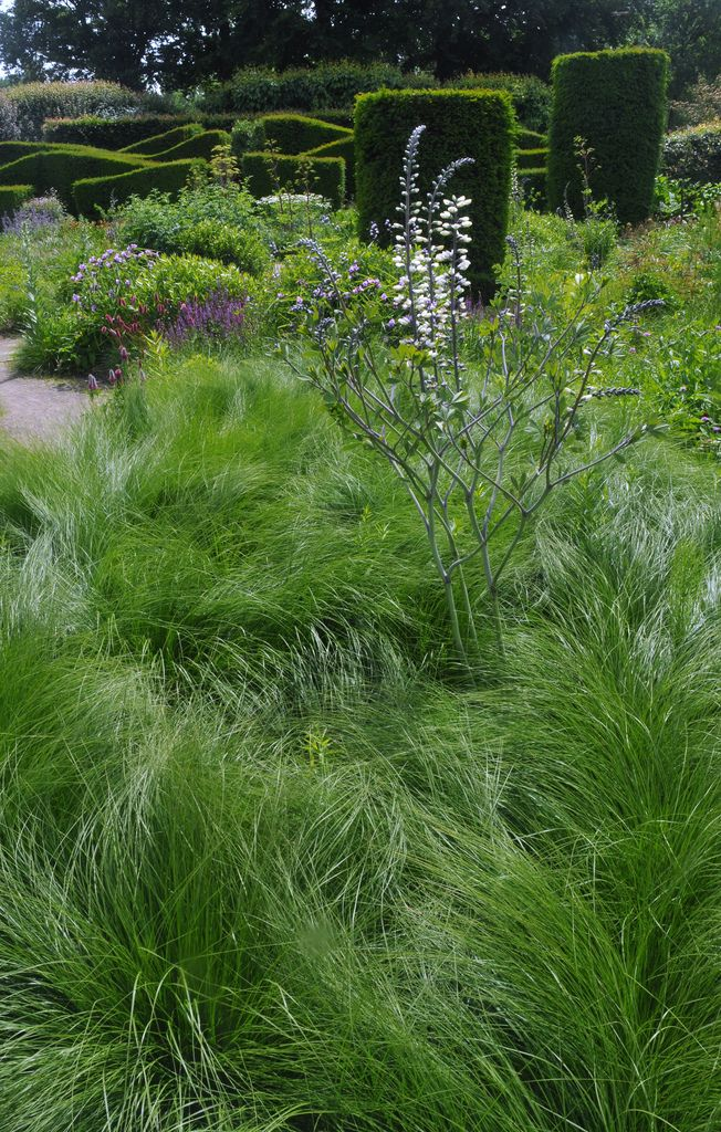 167 Best Images About Piet Oudolf Gardens On Pinterest